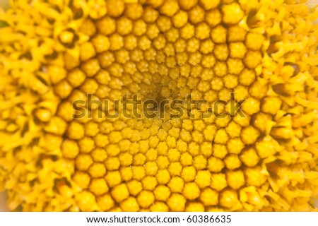 Yellow abstract of the pollen core of daisy flower - stock photo
