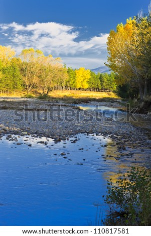 yellow and blue in nature - stock photo