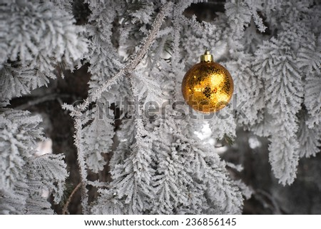 Yellow and golden Christmas ball in real frozen spruce tree - stock photo