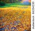 Yellow and green autumn foliage - stock photo