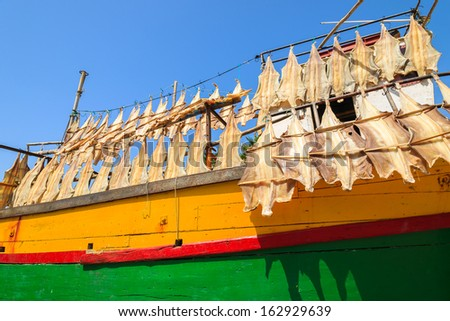 Yellow and green boat hull and fish drying in Camara de Lobos port, Madeira island - stock photo
