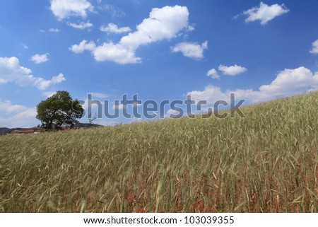 Yellow and Green field with blue summer sky