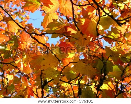yellow and orange autumn leaves