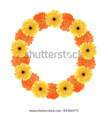 Yellow and orange daisy-gerbera create a letter O on white background - stock photo