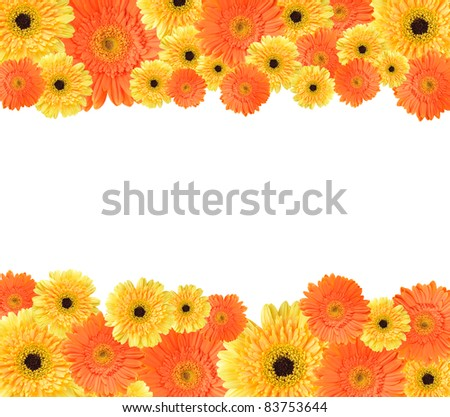 Yellow and orange daisy-gerbera flower create a frame on white background - stock photo