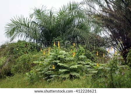 Yellow and orange flowers on a bush, in front of a palm tree, on an oil company camp on Bonny Island, Nigeria