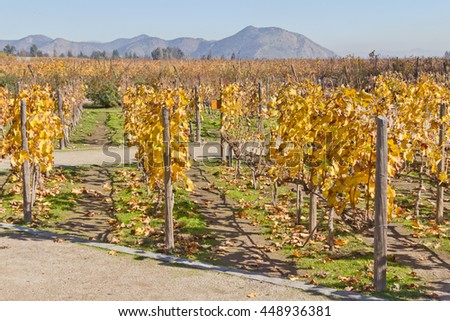 Yellow and orange Grape plants in fall
