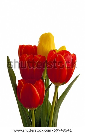 Yellow and orange tulips isolated on white - stock photo