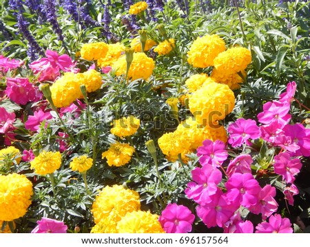 Yellow pink flowers stock photo 696157564 shutterstock yellow and pink flowers mightylinksfo