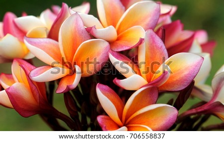 Yellow pink flowers stock photo royalty free 706558837 shutterstock yellow and pink flowers mightylinksfo