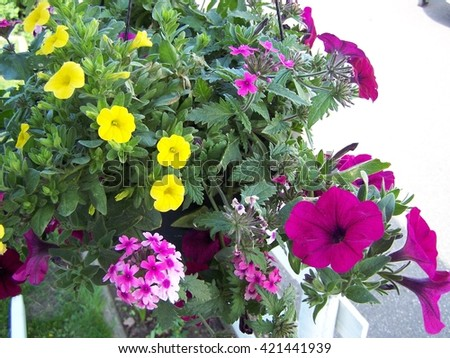 Yellow and purple flower basket close-up - stock photo