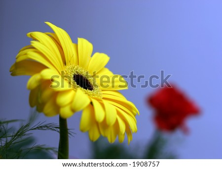 Yellow and red flowers on the blue background
