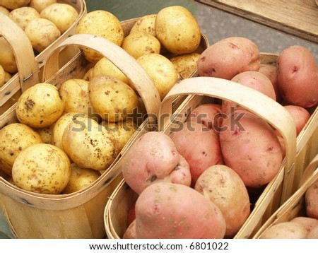 yellow and red potatoes - stock photo