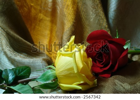 yellow and red roses with a silky  background - stock photo