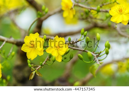 Yellow Apricot Flower