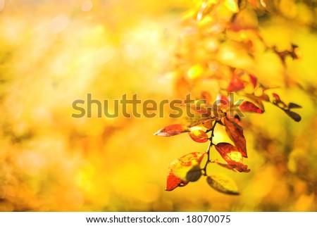 Yellow autumn background - stock photo