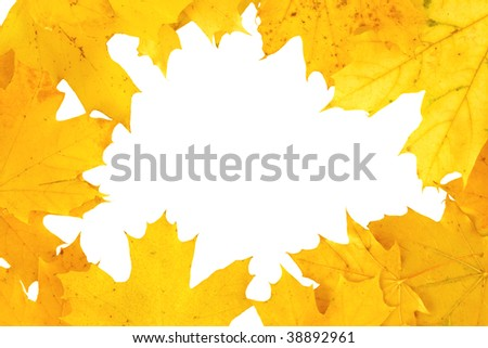 yellow autumn fall leaves isolated over white