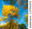 Yellow autumn foliage, locust and poplar trees and blue sky on a bright sunny day - stock photo