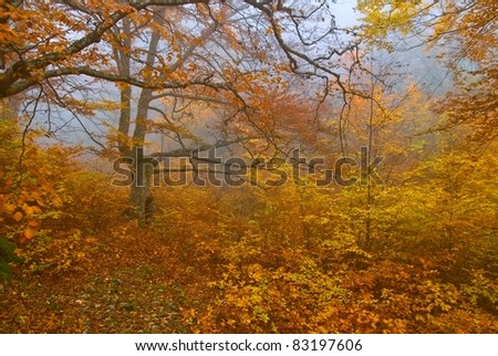 yellow autumn forest in a mist - stock photo