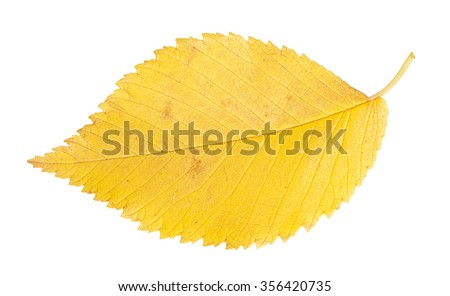 Yellow autumn leaf isolated on a white background - stock photo