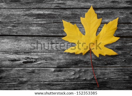 Yellow autumn leaf on black and white background - a single yellow maple leaf resting on a fallen tree trunk in gray tone - stock photo