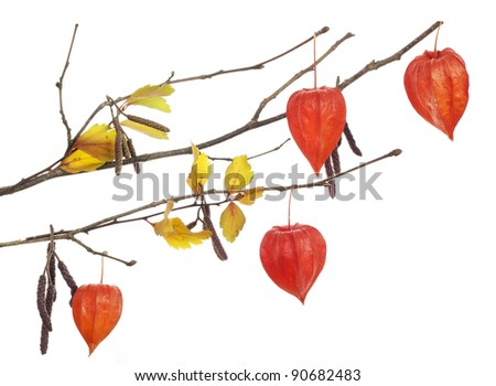 Yellow  autumn leaves and red flowers on tree  branch   isolated
