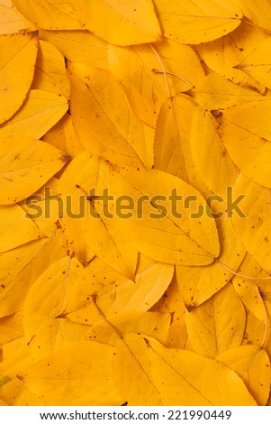 yellow autumn leaves filling the frame