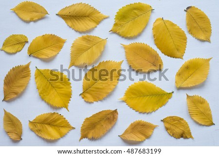 Yellow autumn leaves on a white board