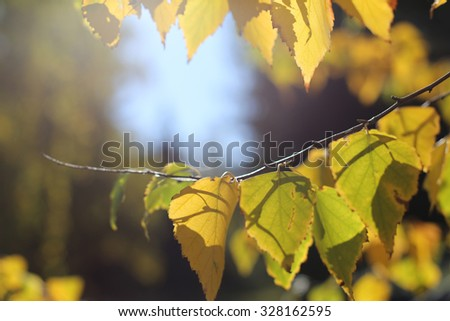 yellow autumn leaves on the branch - stock photo