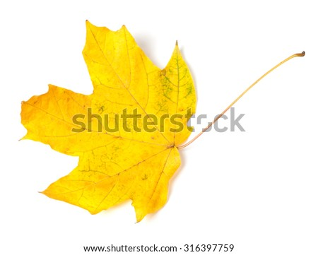 Yellow autumn maple-leaf isolated on white background. Top view - stock photo