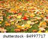 Yellow autumn maple leaves on green grass - stock photo