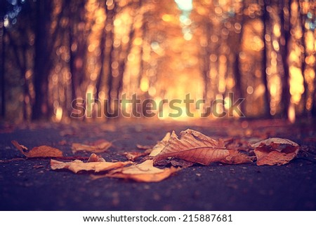 yellow autumn park leaves in September - stock photo
