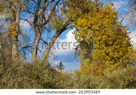 Yellow autumn tree arches over with view of blue sky and clouds beyond - stock photo