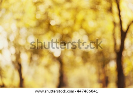 Yellow autumn trees out of focus. Abstract bokeh backdrop. Beautiful natural blurred background of fall park or garden. - stock photo