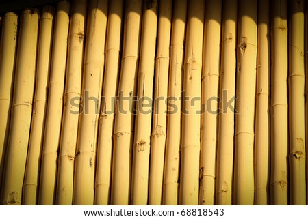Yellow Bamboo - stock photo