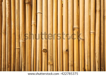 Yellow bamboo fence texture, bamboo background, texture background, bamboo forest - stock photo