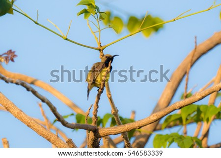 Yellow-bellied sunbird perched on tree against blue sky