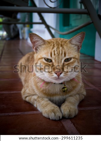 Yellow bengal cat are looking. - stock photo