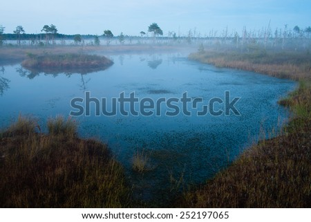 Yellow birch trees on a marsh lake shore with heavy clouds in background and reflections in foreground - stock photo