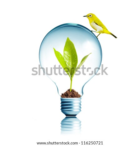 Yellow Bird on top of Light Bulb with soil and green leaf inside - stock photo