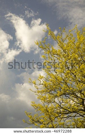 Yellow blossoms against a cloudy sky in spring - stock photo
