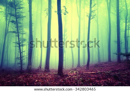 Yellow blue saturated magical season foggy forest landscape background. Over saturated yellow blue forest trees background. - stock photo