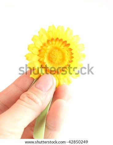 yellow breast-pin/brooch - symbol of the fight against cancer - isolated on white - stock photo