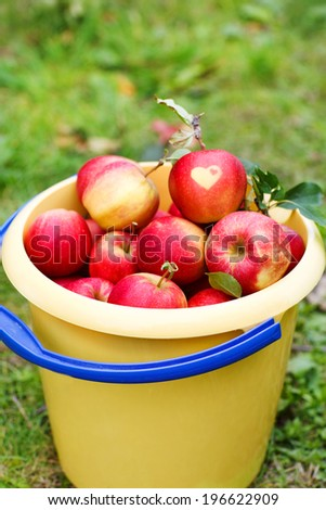 Yellow bucket with red ripe apples from orchard. With heart symbol. - stock photo