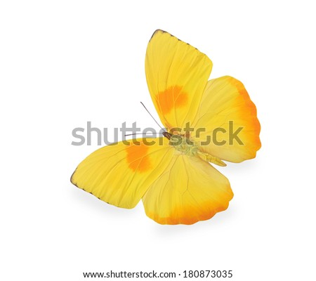 Yellow butterfly isolated on white - stock photo
