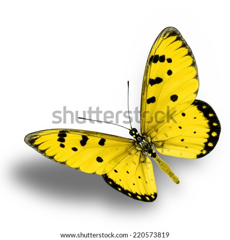 Yellow butterfly upper wing profile flying up. - stock photo