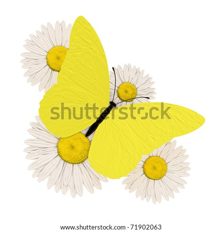 Yellow butterfly with four chamomile - stock photo