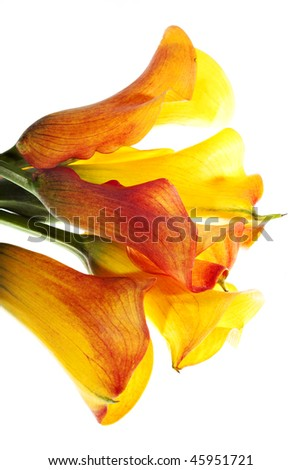 Yellow callas bouquet isolated on white - stock photo