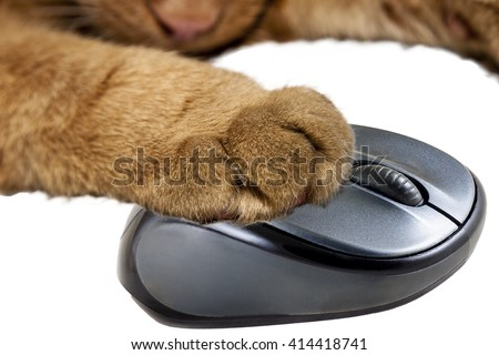 Yellow cat holding a computer mouse - stock photo