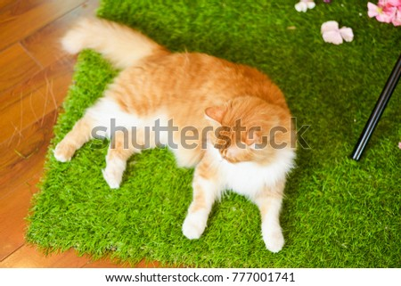 Yellow cat lying on the green lawn